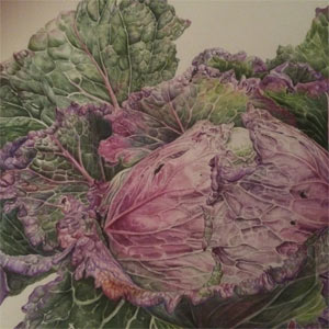 Botanical Artworks, Painings, Sketches, Watercolours, Oils