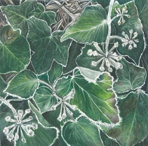 Winter Frost on Ivy Hedera helix or Common Ivy Watercolour painting by Sheryl Pape